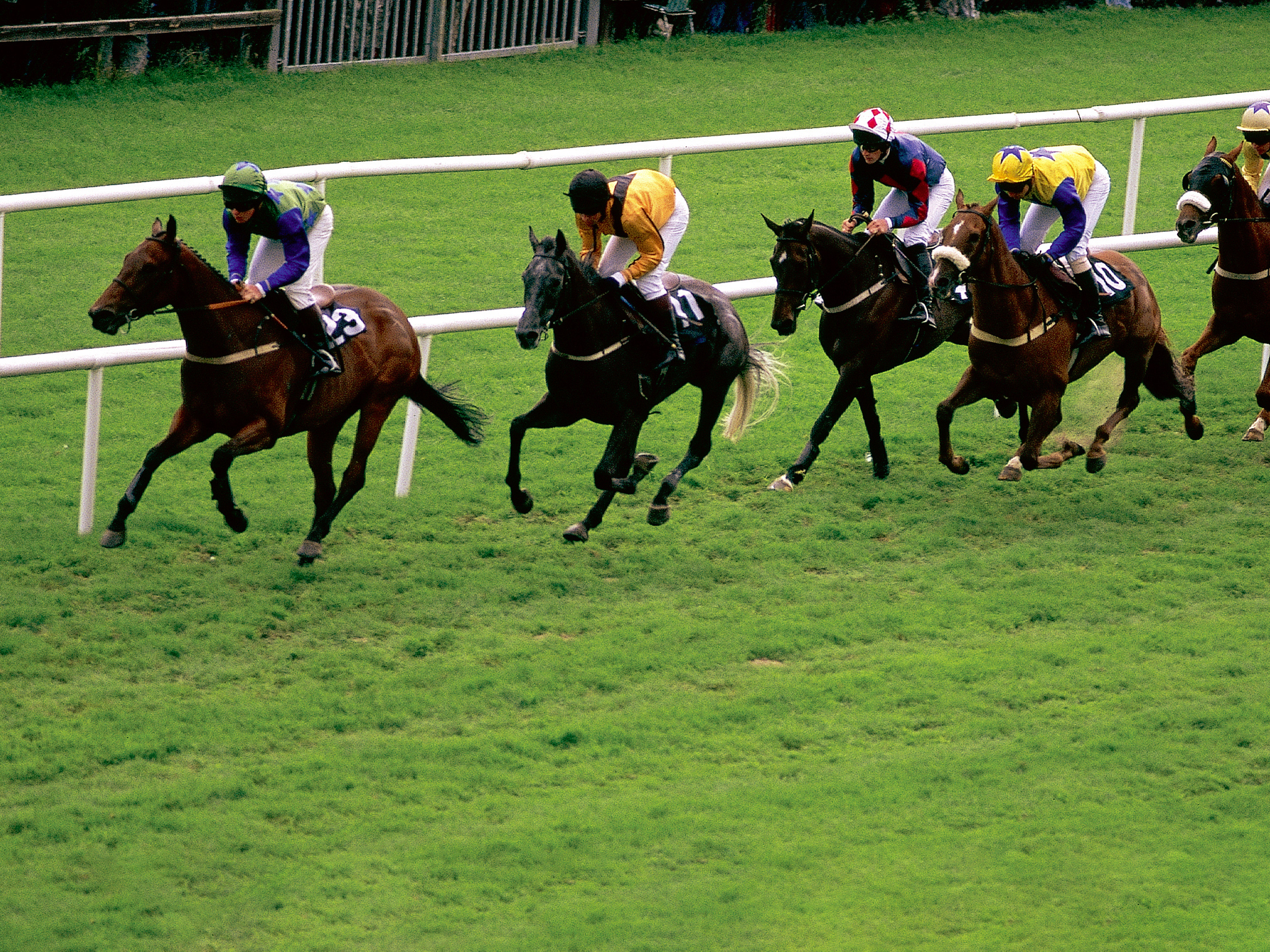 jockeys on horses racing
